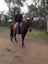 Horse trail riding buddy Ballarat Central Ballarat City Preview
