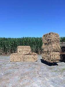 Sugar Cane Mulch , Cattle feed , Garden mulch Woongoolba Gold Coast North Preview