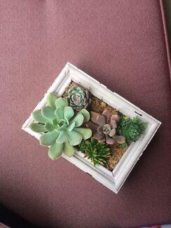 Handmade Vertical Succulent Garden 💙