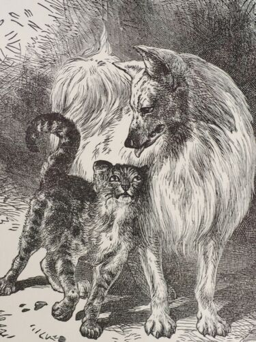 Vintage 1940 era Signed print Spitz Samoyed Eskie dog with kitty cat love!