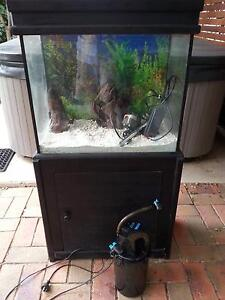 Aquarium tropical setup Quakers Hill Blacktown Area Preview