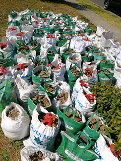 Soil/sands mixture FREE for pickup
