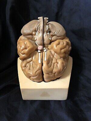 Somso Bs22 Brain Model - 4 Parts Anatomical Model Vintage Bs 22
