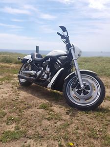 Harley Davidson Night Rod Warabrook Newcastle Area Preview