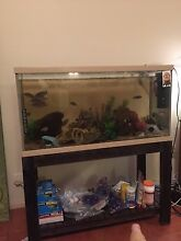 3ft fish tank, stand, filter, aerator, ornaments and fish for sale! Bridgeman Downs Brisbane North East Preview