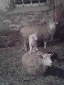 Livestock Farm For Sale Kawartha Lakes Peterborough Area image 1