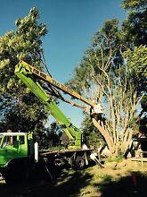 Hunter Tree & Lawn Care Singleton Singleton Area Preview