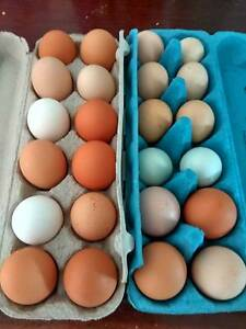 Free-range Eggs for sale Millstream Tablelands Preview