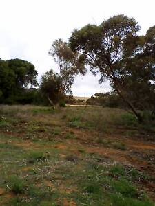 Property for sale 20 acres with house Karoonda Karoonda Area Preview