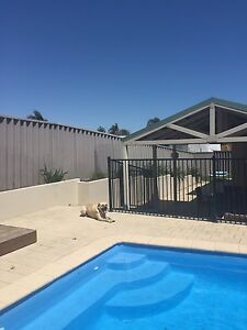 ****House sitter wanted**** Heathridge Joondalup Area Preview