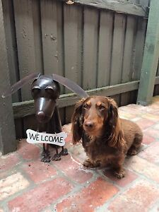 Friend for my little sausage dog wanted Elwood Port Phillip Preview