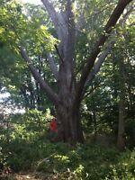 EVANS TREE WORK