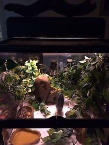 Gecko & terrarium
