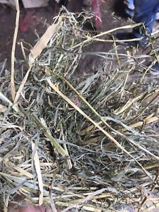2nd cut small square hay