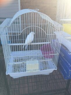 Canary male for sale with small cage Edensor Park Fairfield Area Preview