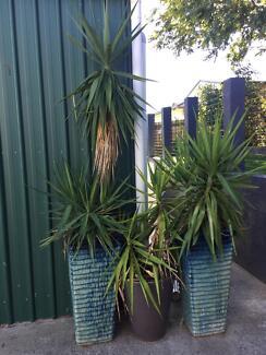 extra large garden pots brisbane. 3 large pot plants extra large garden pots brisbane :