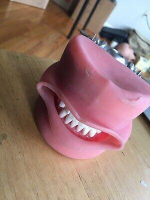 Nissin Kilgore Dental Typodont - Used