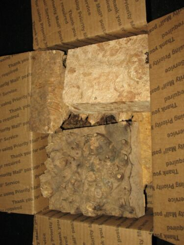 Hobby Wood Box Lot Figured Spalted Maple Burl smalls trims woodcraft knife