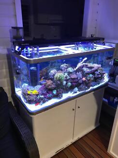 Complete marine aquarium