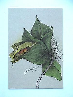 BRUNO BRUNI - Farblithographie - HANDSIGNIERT - Orchidee