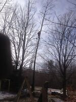 Tree & limb removal services insured