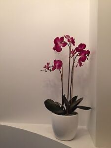 Designer large white pot dark pink orchid from home sense