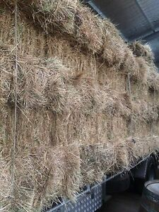 Hay For Sale Adelaide CBD Adelaide City Preview