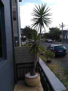Potted Plant Botany Botany Bay Area Preview