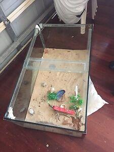Reptile tank Currimundi Caloundra Area Preview