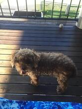 Lost Poodle Blackwater Central Highlands Preview