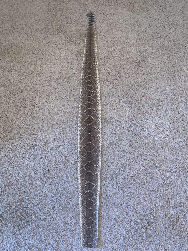 Rattlesnake Skin Craft Taxidermy 53 Incher