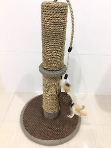 Cat tree Riverwood Canterbury Area Preview