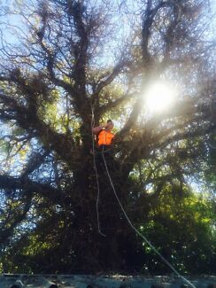 Tree lopping / pruning / trimming  Belfield Canterbury Area Preview