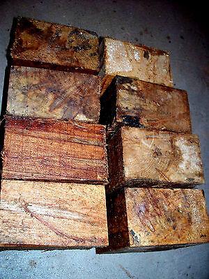 Eight  8  Ambrosia Maple Bowl Blanks Lathe Turning Blocks Wood 5 X 5 X 3