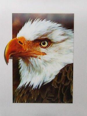 Bald Eagle - 3D Lenticular Poster -  -12x16 Print