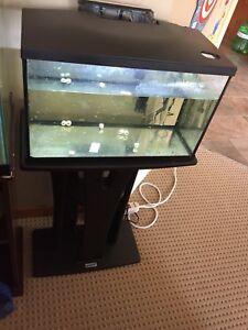 10 gallon fish tank full set up and fish