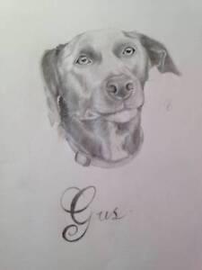puppy/dog portrait Cheltenham Kingston Area Preview