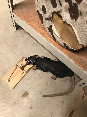 Rat In Trap Prank Gag Animated Prop Halloween Horror Animatronic Sound - Animatronic Halloween Props