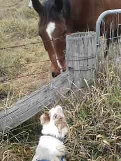 House & Pet Sitting (Local & Interstate)