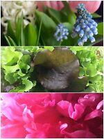 Small space garden services