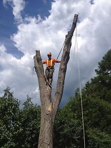 Tree Service/Removal Kingston Kingston Area image 10