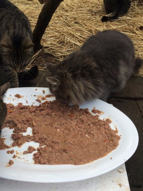CAT RECIPE HELPS BUY FOOD FOR FERAL CATS RESCUE CHARITY NON PROFIT 8 pages
