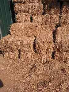 Pea straw $6 per square bale Mannum Mid Murray Preview