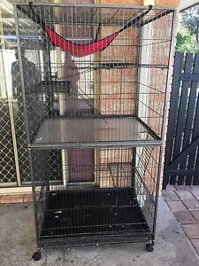 Female ferret with huge cage Gosnells Gosnells Area Preview