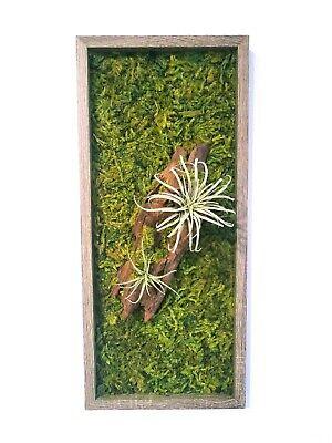 Cuadro con musgo, cuadro vivo, moss wall art