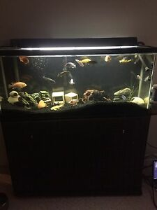 55 gallon freshwater tank with matching stand