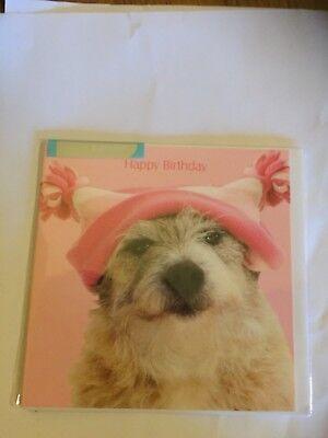 Jack russell terrier cross dog in pink woolly hat Birthday greetings card