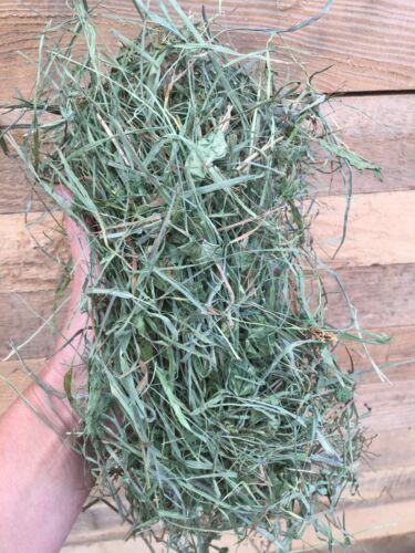1 lb - PREMIUM 3rd Cut Hay! Timothy Mixed Grass Hay, Guinea Pig hay, Rabbit hay