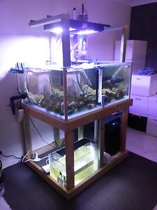 Turtle / Sting Ray Motoro Tank Aquarium & New Sump. Kelmscott Armadale Area Preview