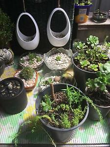 CHRISTMAS SALE ON PLANTS AND SUCCULENTS Kingston Kingborough Area Preview